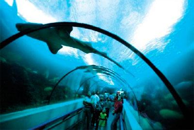 национальный аквариум внутри