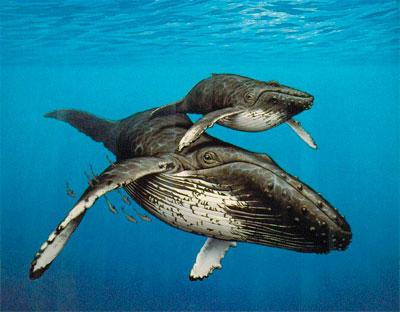 киты в Банка Де Ла Плата