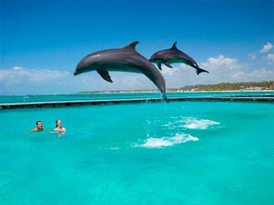 шоу с дельфинами в Манати Парк