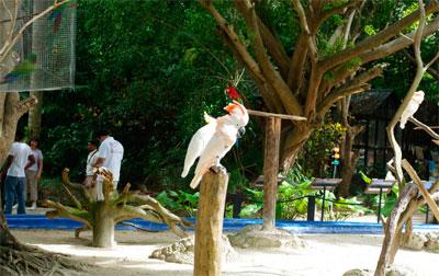 Манати Парк попугаи