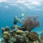 snorkelling у рифов