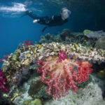 красивые океанские рифы перед пловцом